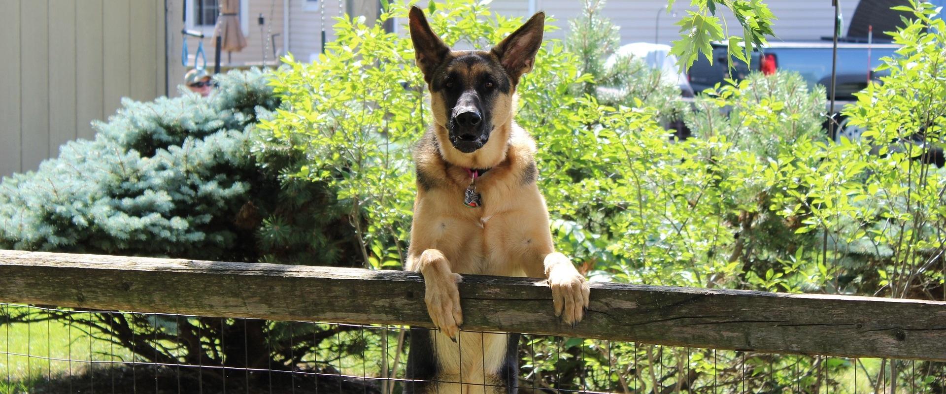 Gedragstherapie-training | Hondenschool Zuid-West - Al ruim 25 jaar de hondentrainer | Roosendaal, Oud Gastel, Steenbergen, Zevenbergen, Oudenbosch, Standaardbuiten, Fijnaart
