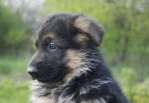 professionele puppycursus in Roosendaal | Hondenschool Zuid-West | Roosendaal, Oud Gastel, Steenbergen, Zevenbergen, Oudenbosch, Standaardbuiten, Fijnaart