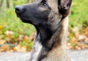 honden cursussen in nederland | Hondenschool | Roosendaal, Oud Gastel, Steenbergen, Zevenbergen, Oudenbosch, Standaardbuiten, Fijnaart | Hondenschool Zuid-West